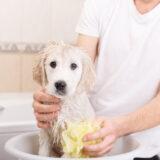 Welpeneingewöhnung Hundesalon