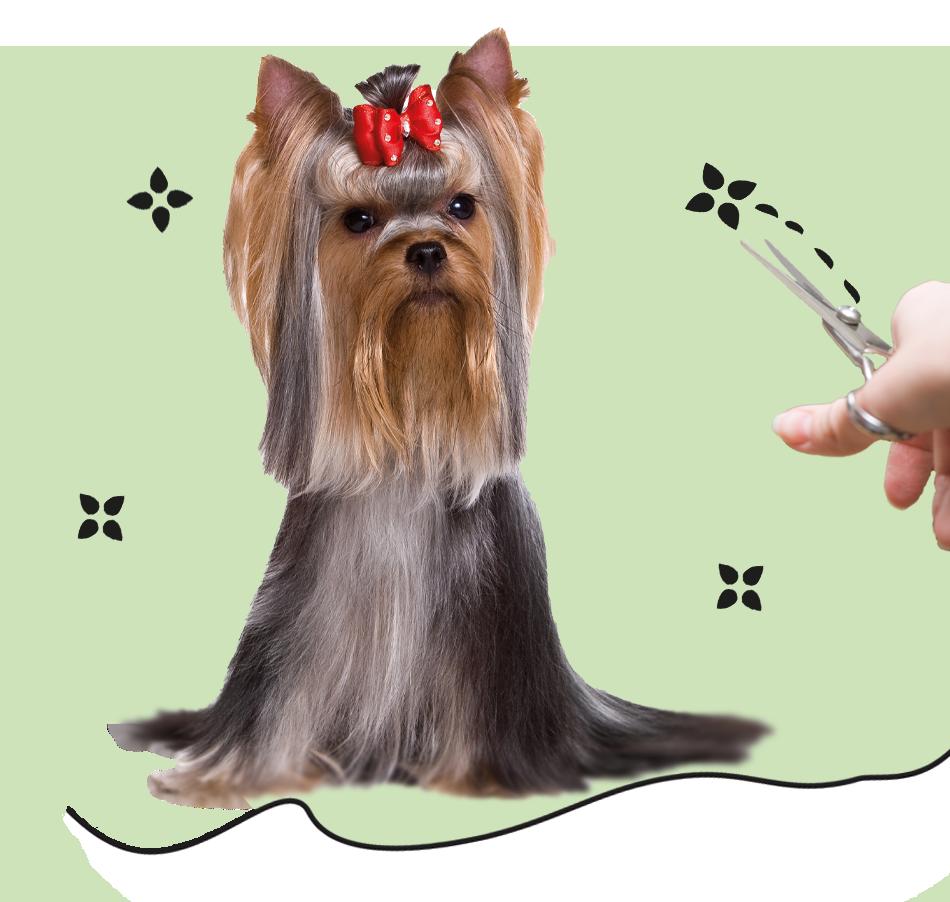 Hundesalon Echterdingen