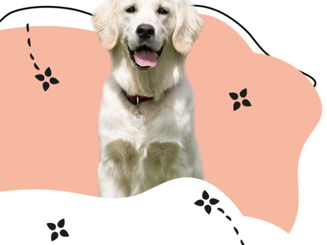 https://www.hundesalon-prestige.de/wp-content/uploads/2020/09/Retriever-640x480.png