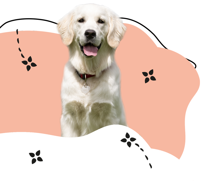 https://www.hundesalon-prestige.de/wp-content/uploads/2020/09/Retriever.png